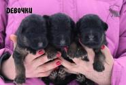 05_Puppies_Umaro_Chernika_GIRLS