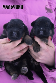 07_Puppies_Umaro_Chernika_BOYS