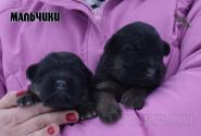 08_Puppies_Umaro_Chernika_BOYS