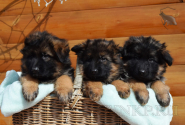 10_Puppies_Umaro_Chernika_BG