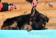 14_Puppies_Umaro_Chernika_RALFA