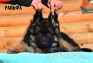 15_Puppies_Umaro_Chernika_RALFA