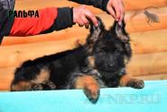 17_Puppies_Umaro_Chernika_RALFA