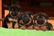 04_Puppies_Garry_Mishel_GIRLS