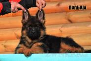 05_Puppies_Garry_Mishel_POLSHA