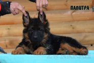 07_Puppies_Garry_Mishel_PALITRA