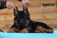 07_Puppies_Garry_Mishel_PALITRA