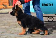 08_Puppies_Garry_Mishel_PALITRA