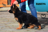 08_Puppies_Garry_Mishel_PALITRA