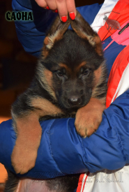 01_Puppies_Uragan_Barselona_SAONA