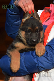 02_Puppies_Uragan_Barselona_SAONA