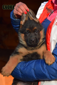 03_Puppies_Uragan_Barselona_SAONA