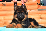 04_Puppies_Uragan_Barselona_SAYANA