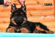 05_Puppies_Uragan_Barselona_SAYANA