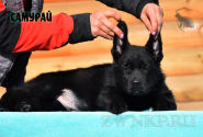 06_Puppies_Uragan_Barselona_SAMURAJ