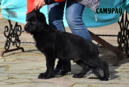 08_Puppies_Uragan_Barselona_SAMURAJ