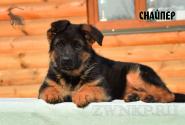 09_Puppies_Uragan_Barselona_SNAJPER