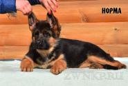 01_Puppies_Uragan_Igrushka_NORMA