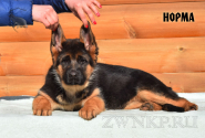 02_Puppies_Uragan_Igrushka_NORMA