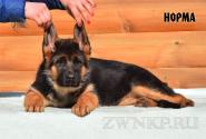 03_Puppies_Uragan_Igrushka_NORMA