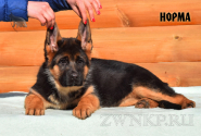 04_Puppies_Uragan_Igrushka_NORMA