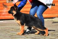 05_Puppies_Uragan_Igrushka_NORMA