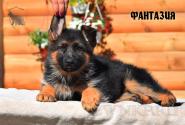 17_Puppies_Uragan_Viagra_FANTAZIYA