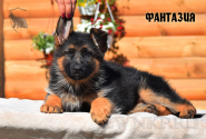 17_Puppies_Uragan_Viagra_FANTAZIYA