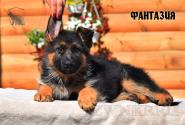 18_Puppies_Uragan_Viagra_FANTAZIYA