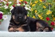 01_Puppies_Billy_Lanesta_BOYS_GIRLES