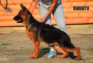 40_Puppies_Garry_Imidzha_PAKITO