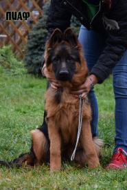 47_Puppies_Garry_Imidzha_PIAF