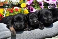 05_Puppies_Yamaguchi_Avantura_GIRLS_BBr_BL