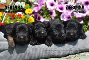 06_Puppies_Yamaguchi_Avantura_GIRLS_BBr_BL