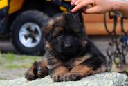 19_Puppies_Yamaguchi_Avantura_GIRL_BBr