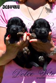 01_Puppies_Uragan_Yolka3_GIRLS