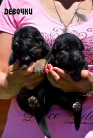 02_Puppies_Uragan_Yolka3_GIRLS