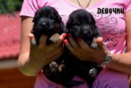 04_Puppies_Uragan_Yolka3_GIRLS