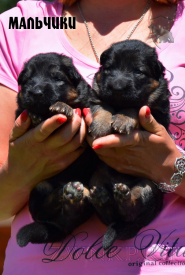 05_Puppies_Uragan_Yolka3_BOYS