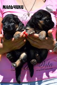 07_Puppies_Uragan_Yolka3_BOYS