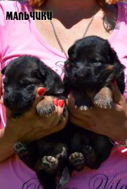 08_Puppies_Uragan_Yolka3_BOYS