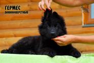 23_Puppies_Uragan_Yolka3_GERMES_BL_LH