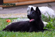 29_Puppies_Uragan_Yolka3_GREJSFOL_BL