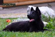 29_Puppies_Uragan_Yolka3_GREJSFOL_BL