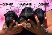 01_Puppies_Garry_Yolka3_BOY_GIRLS