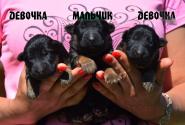 02_Puppies_Garry_Yolka3_BOY_GIRLS