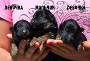 03_Puppies_Garry_Yolka3_BOY_GIRLS