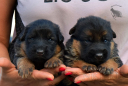 04_Puppies_Garry_Kaora_BG