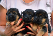 05_Puppies_Garry_Kaora_BG