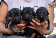 06_Puppies_Garry_Kaora_BG